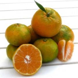 Tangerines Hernandina 6 Kg