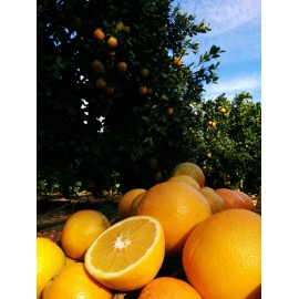Naranjas Navelina 6 kilos